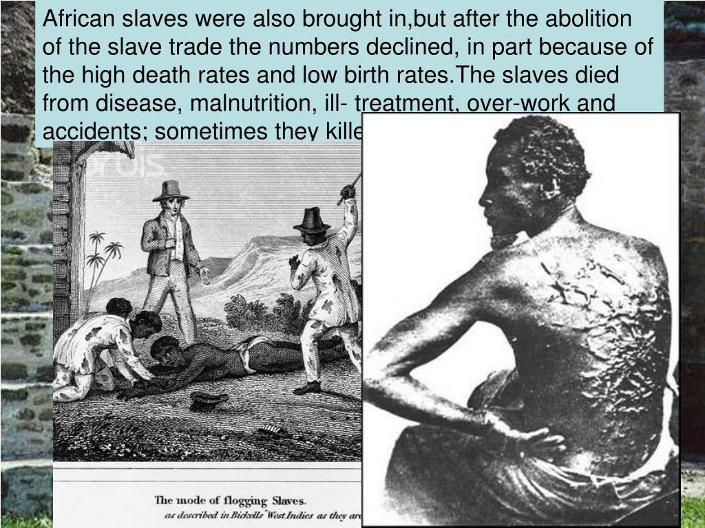African slaves were also brought in,but after the abolition of the slave trade the numbers declined, in part because of the high death rates and low birth rates.The slaves died from disease, malnutrition, ill- treatment, over-work and accidents; sometimes they killed themselves.