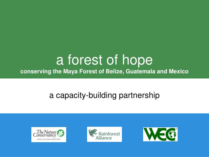 A forest of hope conserving the maya forest of belize guatemala and mexico