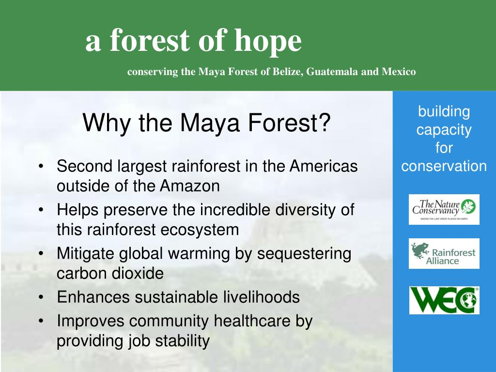 Why the Maya Forest?