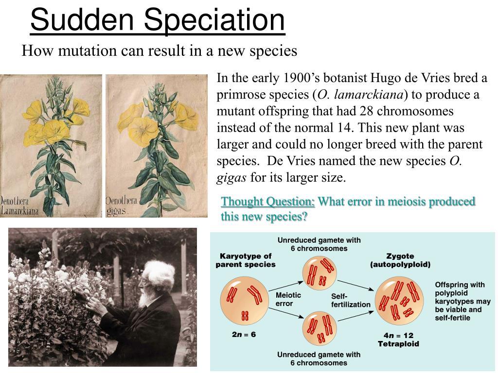 Sudden Speciation