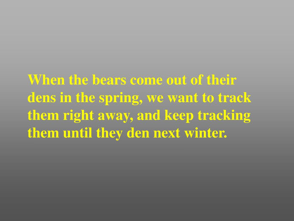 When the bears come out of their dens in the spring, we want to track them right away, and keep tracking them until they den next winter.