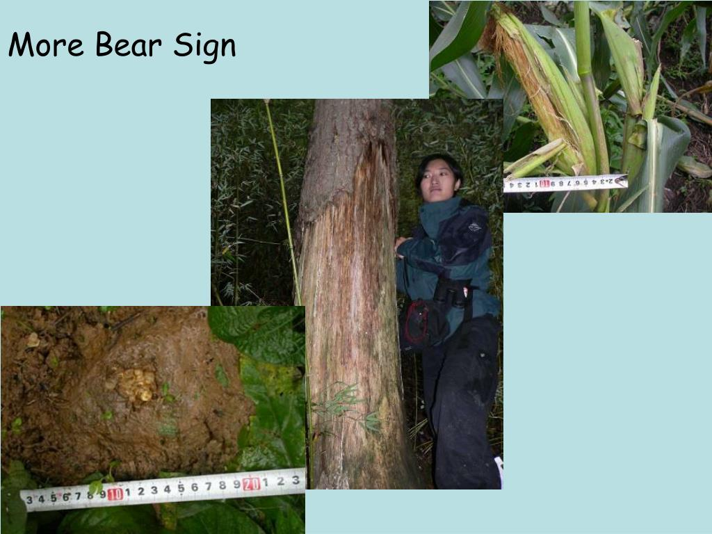 More Bear Sign