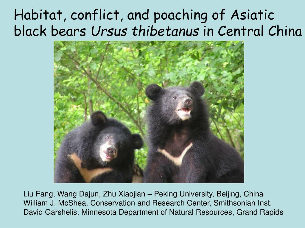 Habitat, conflict, and poaching of Asiatic