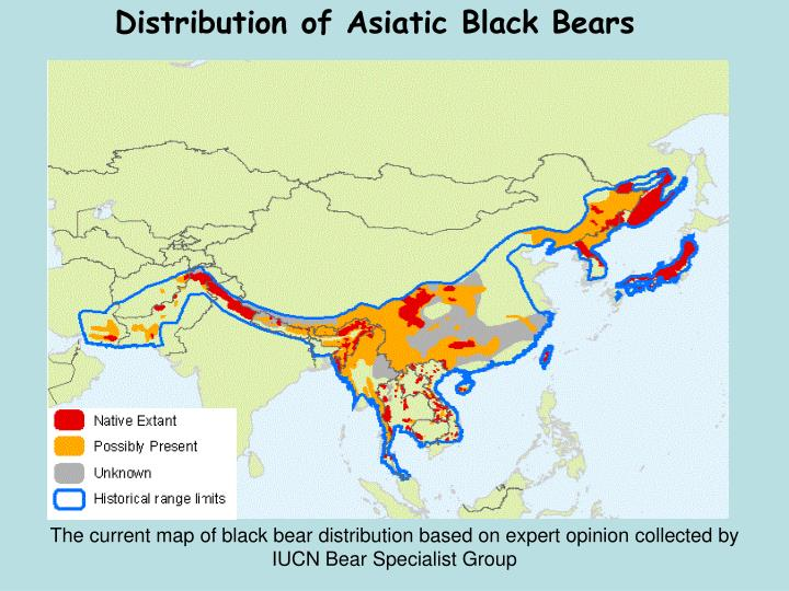 Distribution of Asiatic Black Bears