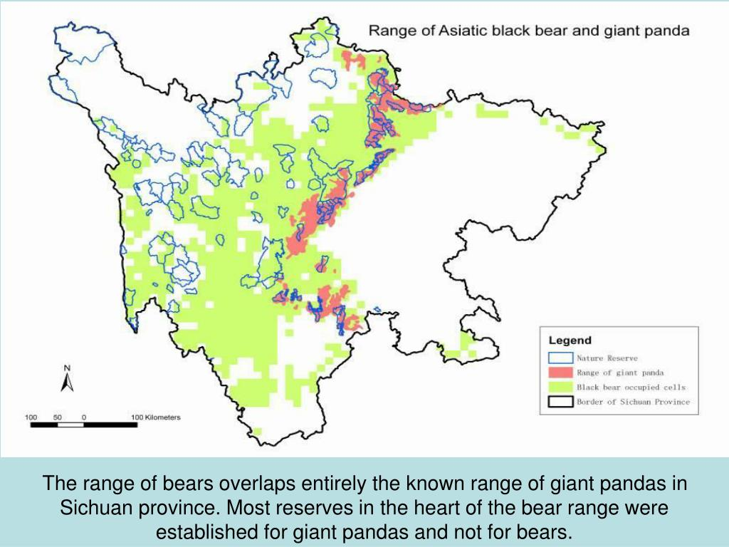 The range of bears overlaps entirely the known range of giant pandas in Sichuan province. Most reserves in the heart of the bear range were established for giant pandas and not for bears.
