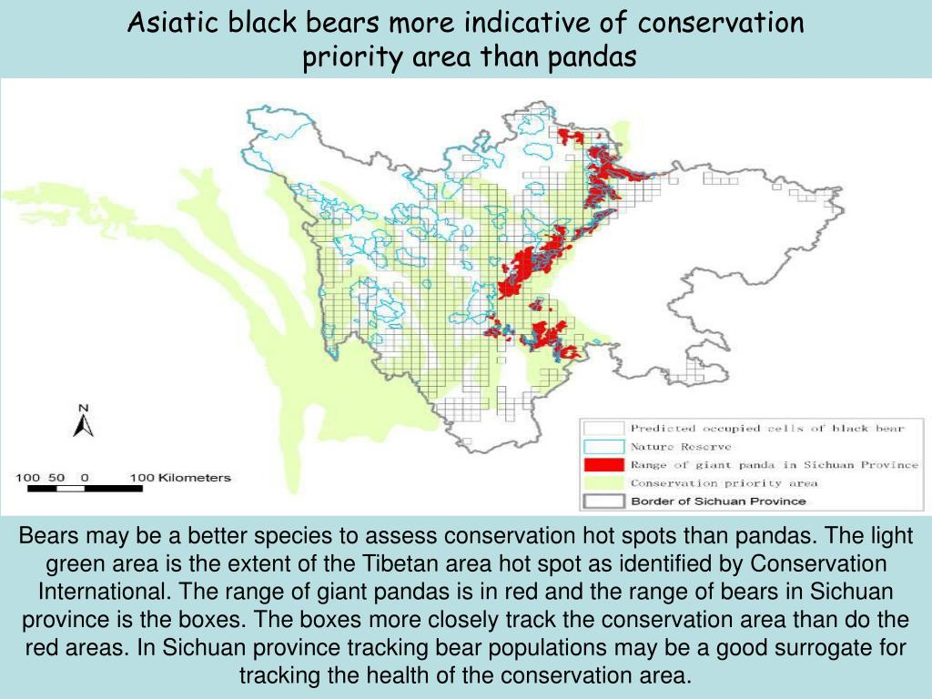 Asiatic black bears more indicative of conservation