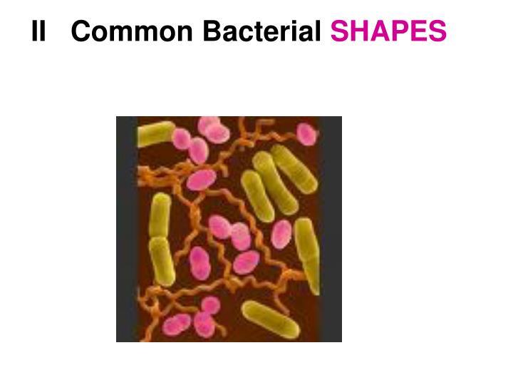 II   Common Bacterial