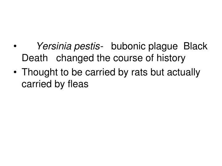 Yersinia pestis-