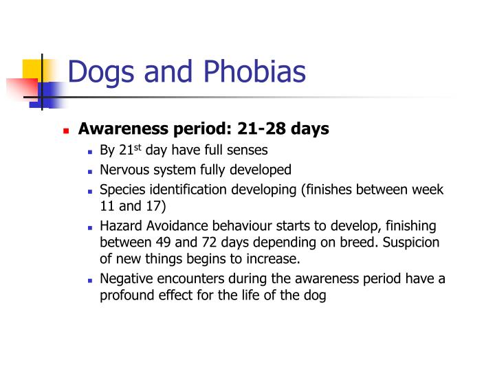 Dogs and phobias3