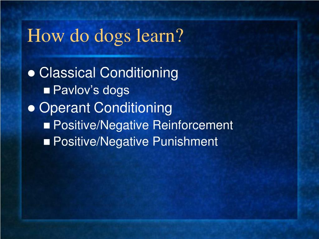 How do dogs learn?