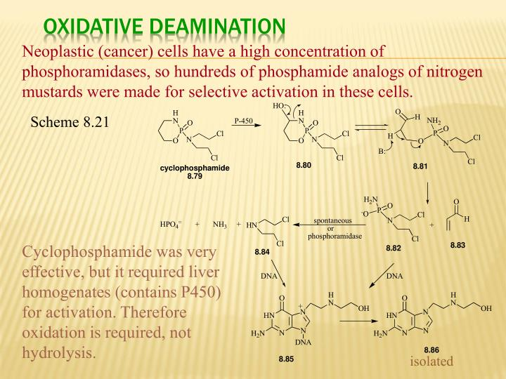 Oxidative Deamination