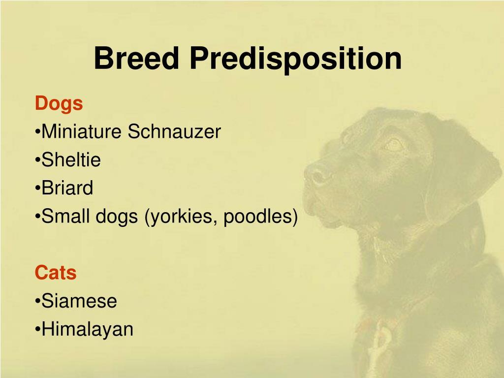 Breed Predisposition
