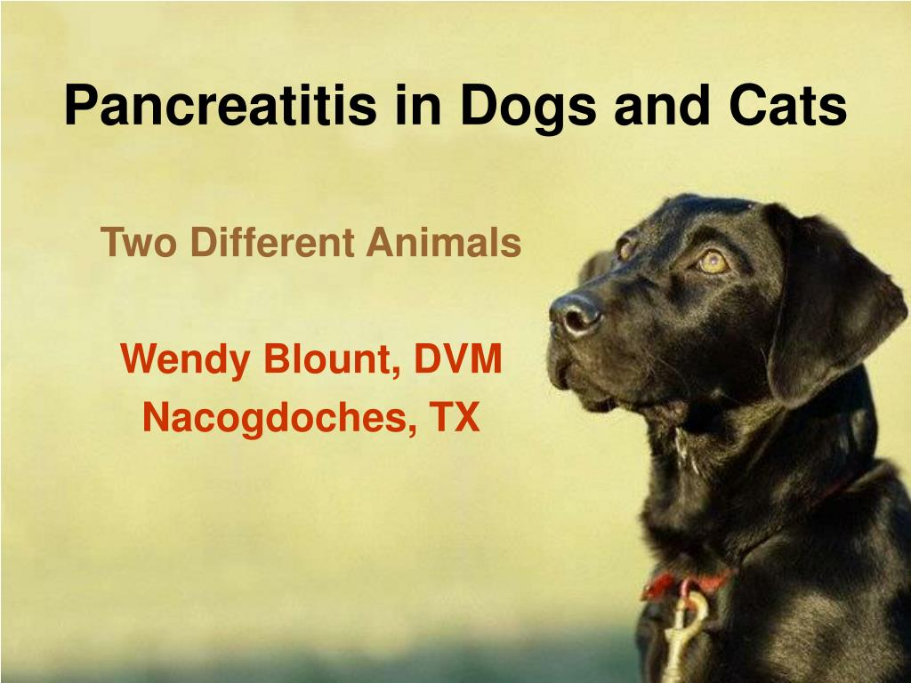 Pancreatitis in Dogs and Cats