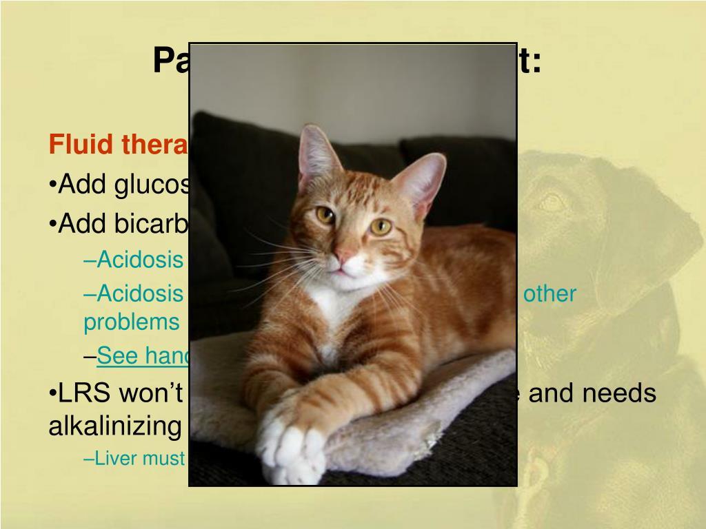 Pancreatitis Treatment: