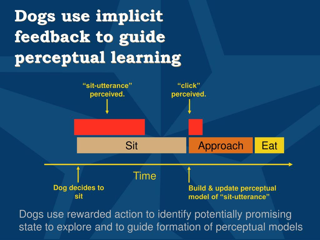 Dogs use implicit feedback to guide perceptual learning
