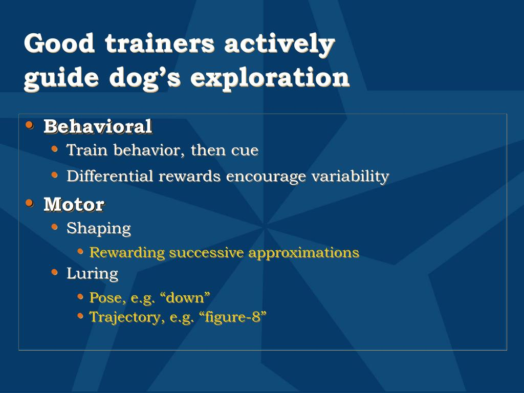 Good trainers actively guide dog's exploration