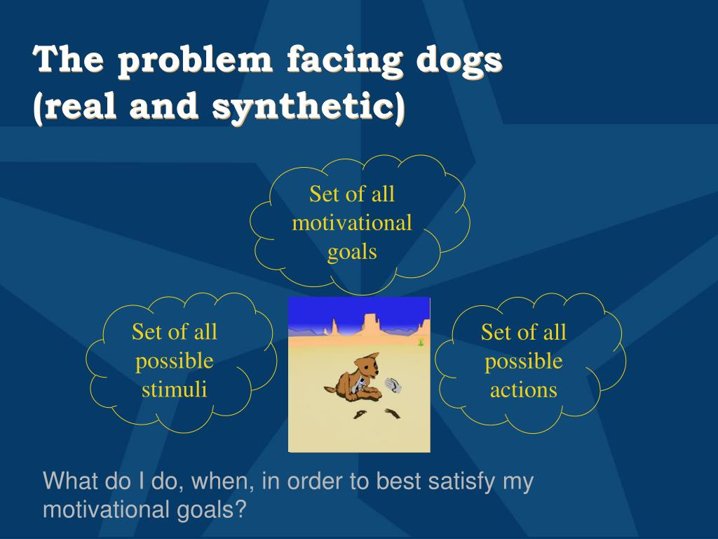 The problem facing dogs (real and synthetic)