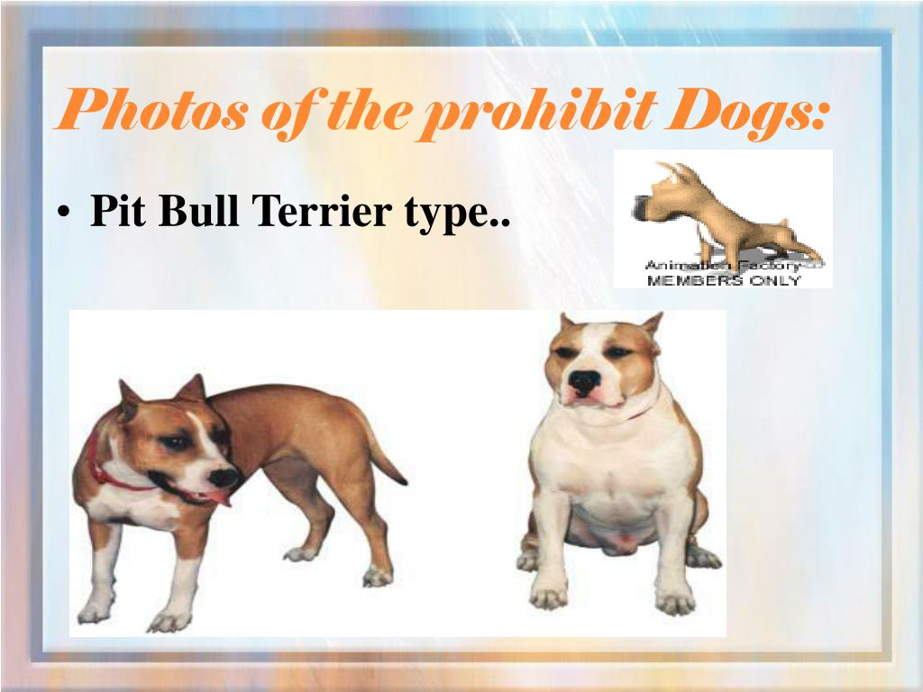 Photos of the prohibit Dogs: