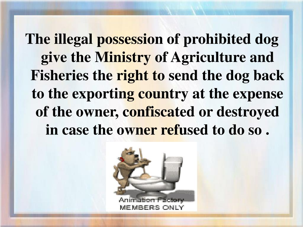 The illegal possession of prohibited dog give the Ministry of Agriculture and Fisheries the right to send the dog back to the exporting country at the expense of the owner, confiscated or destroyed in case the owner refused to do so .