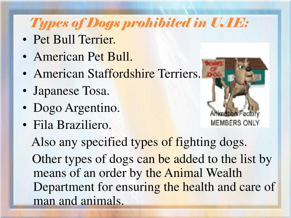 Types of Dogs prohibited in UAE: