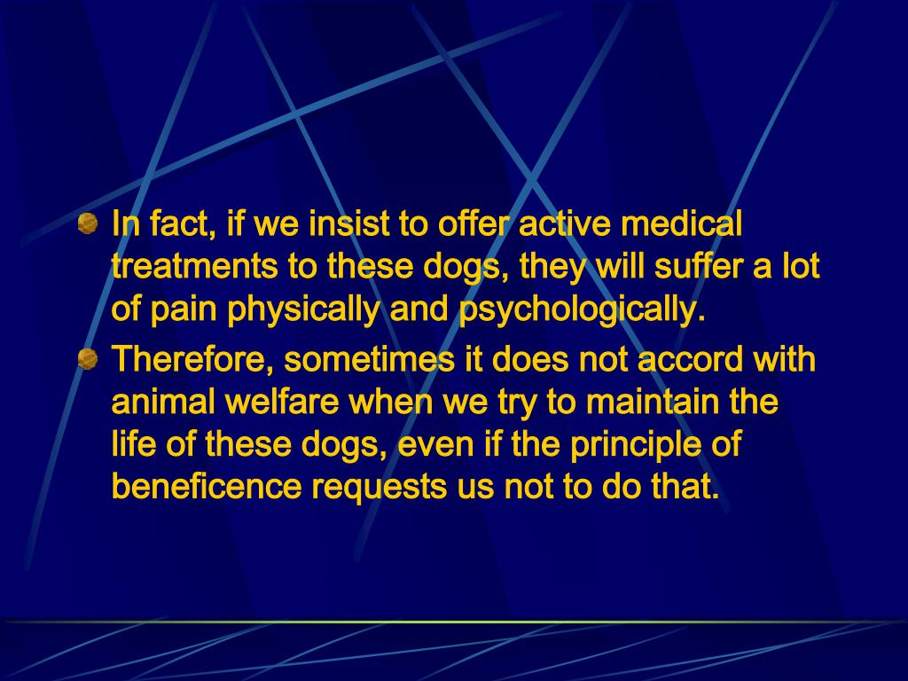 In fact, if we insist to offer active medical treatments to these dogs, they will suffer a lot of pain physically and psychologically.