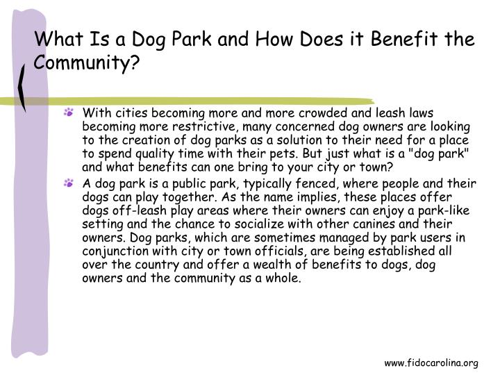 What is a dog park and how does it benefit the community