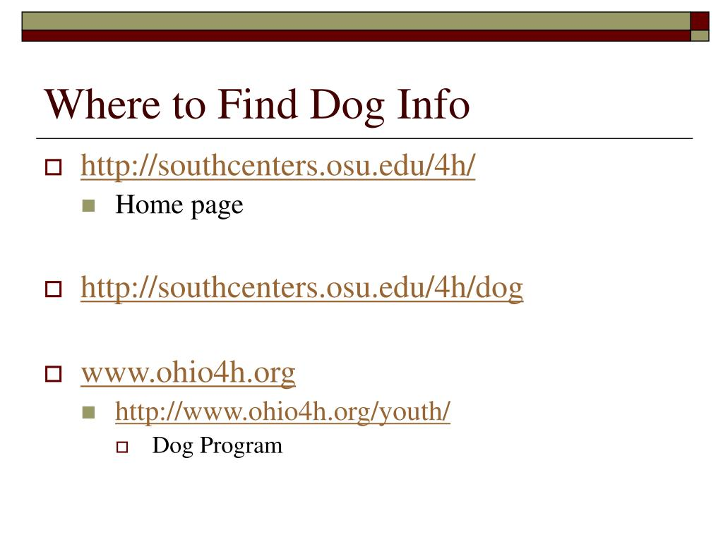 Where to Find Dog Info