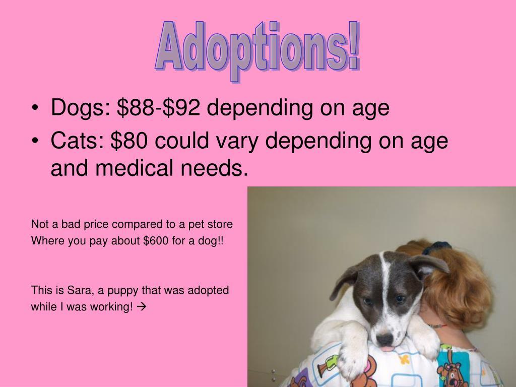 Adoptions!