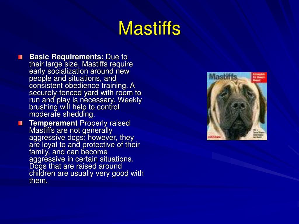 Mastiffs