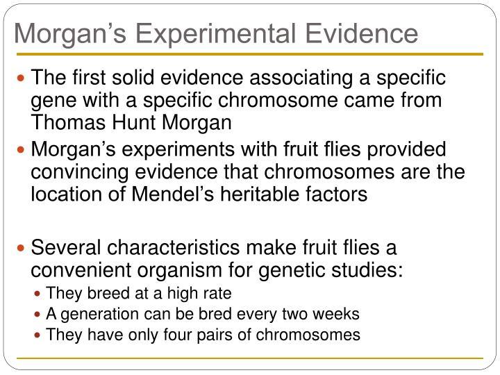 Morgan's Experimental Evidence