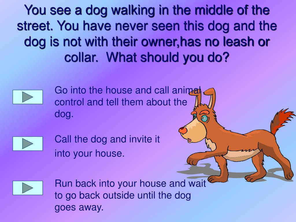 Go into the house and call animal control and tell them about the dog.