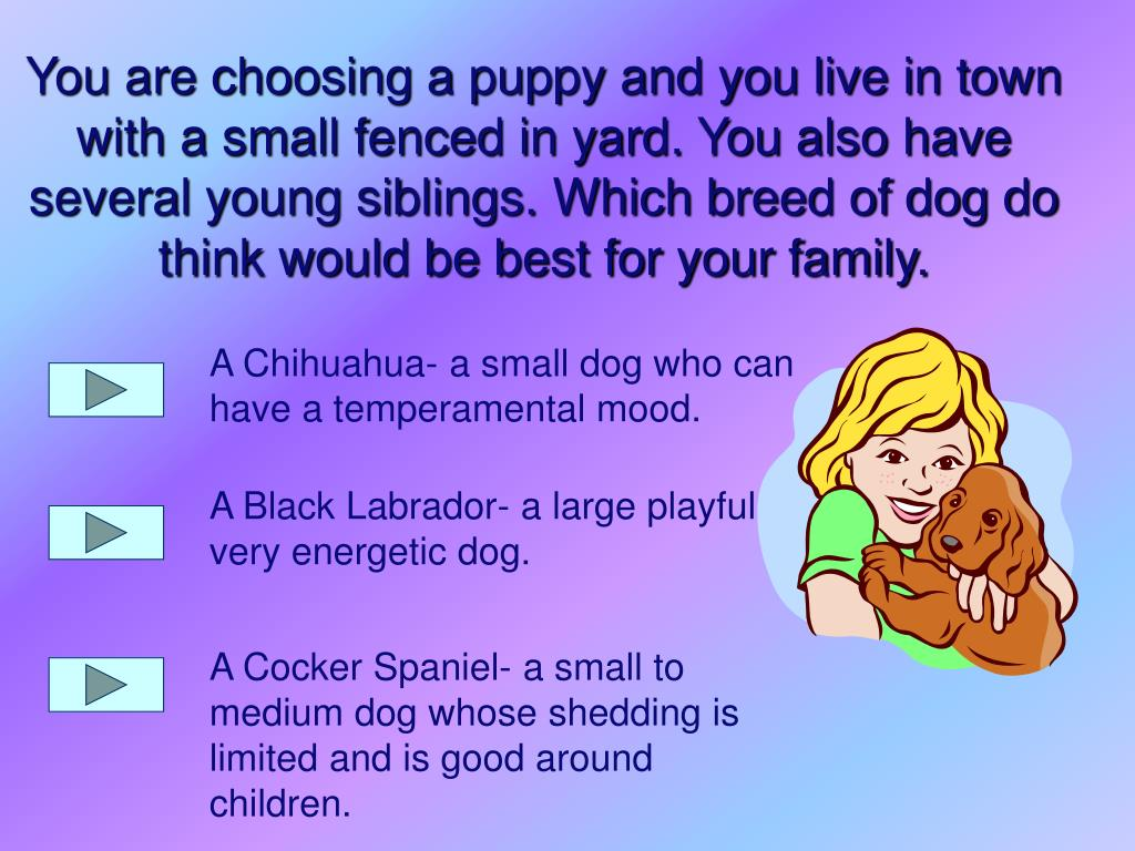 A Chihuahua- a small dog who can have a temperamental mood.