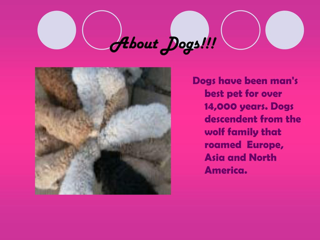 About Dogs!!!