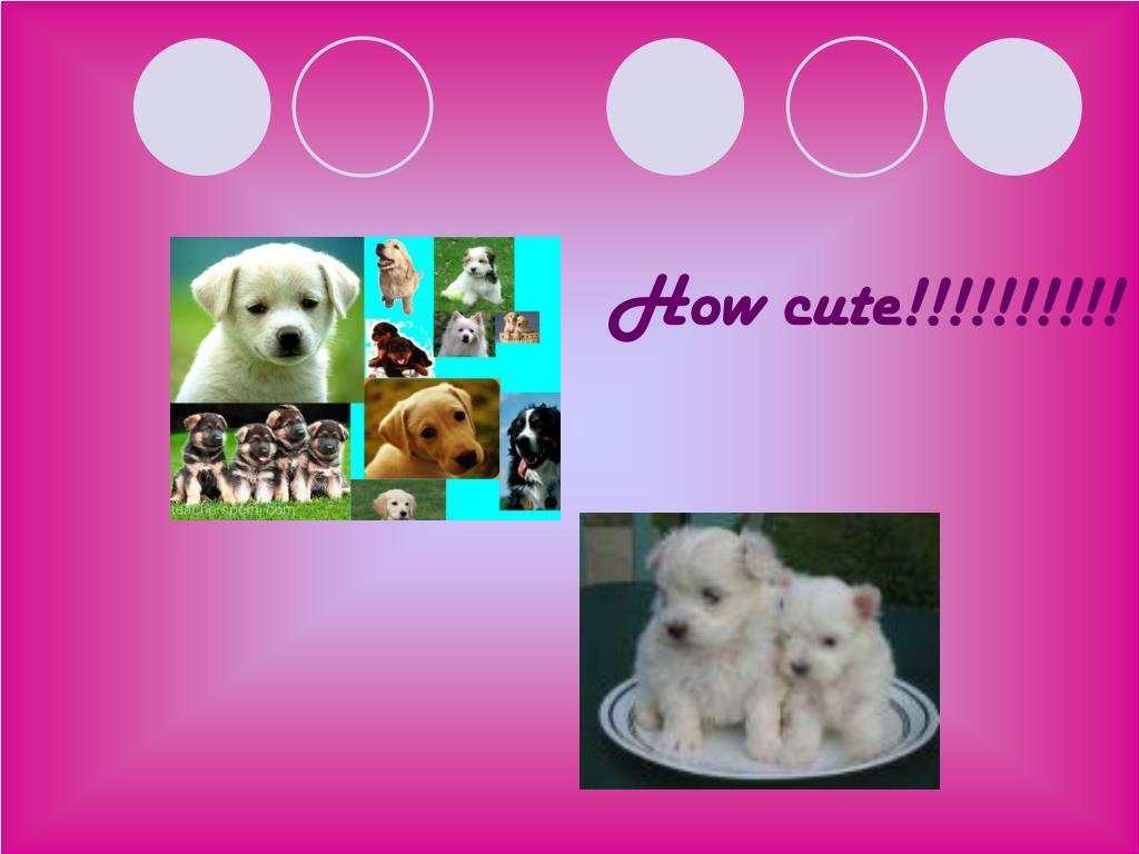 How cute!!!!!!!!!!
