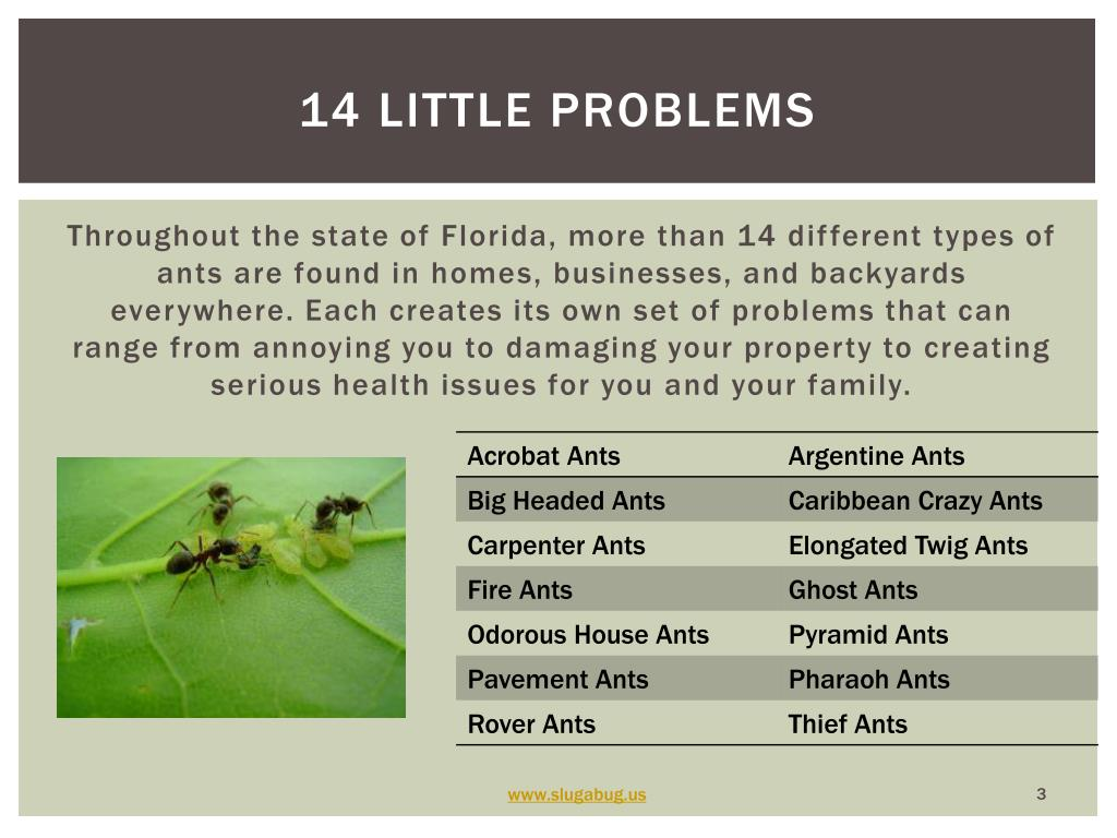 14 little problems
