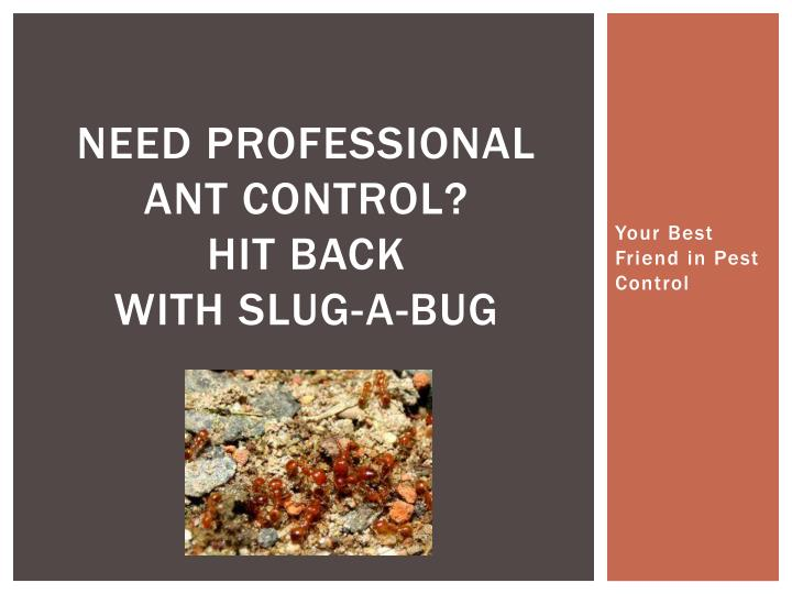 Need professional ant control hit back with slug a bug