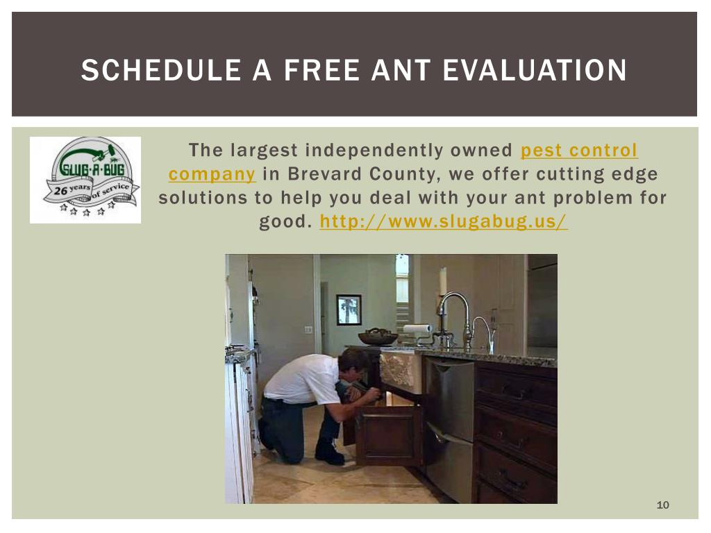Schedule a free ant evaluation