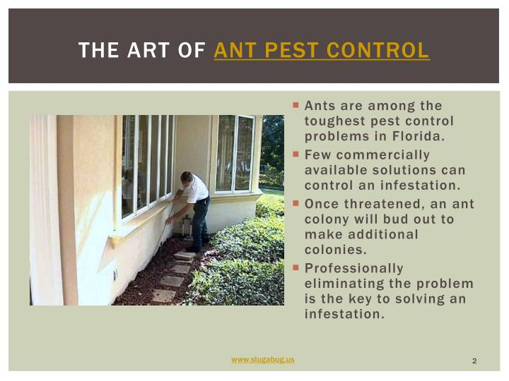 The art of ant pest control