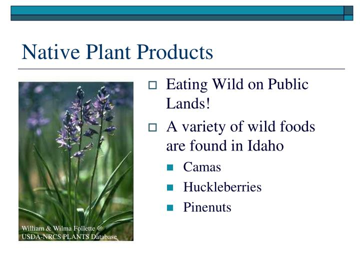 Native Plant Products