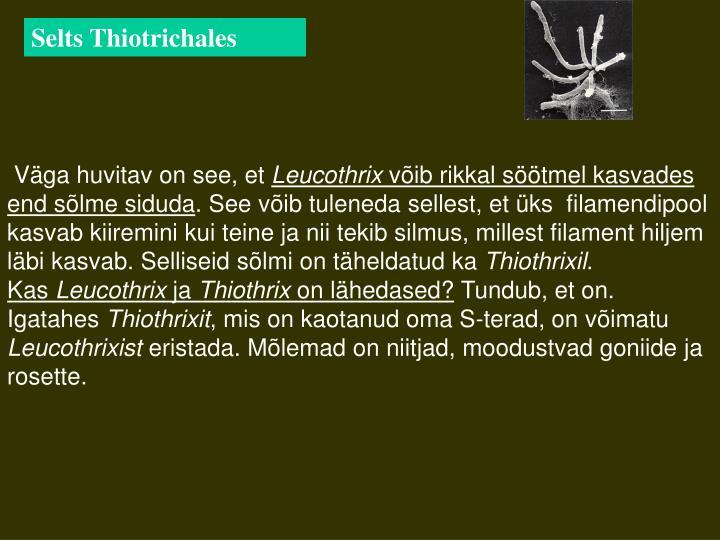 Selts Thiotrichales