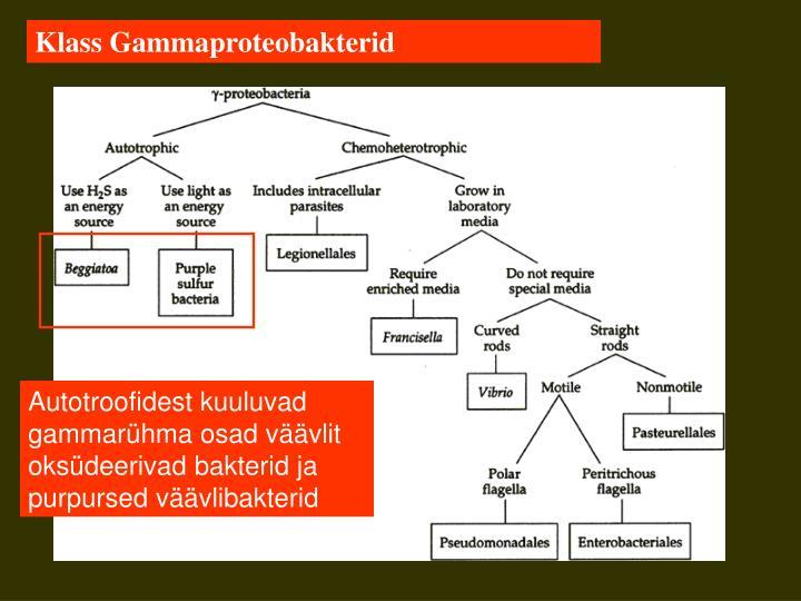 Klass Gammaproteobakterid