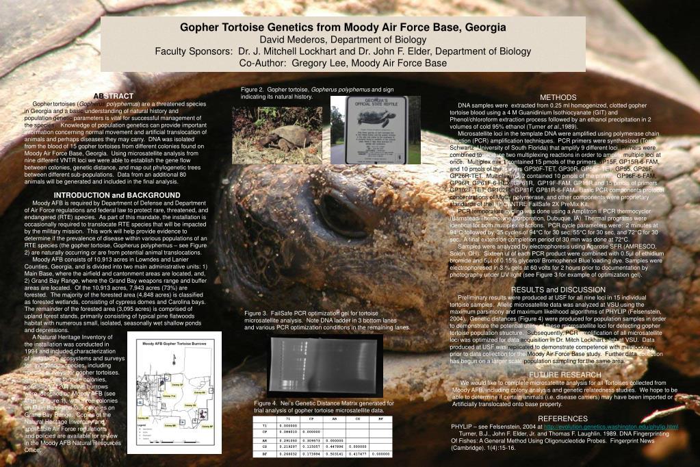 Gopher Tortoise Genetics from Moody Air Force Base, Georgia