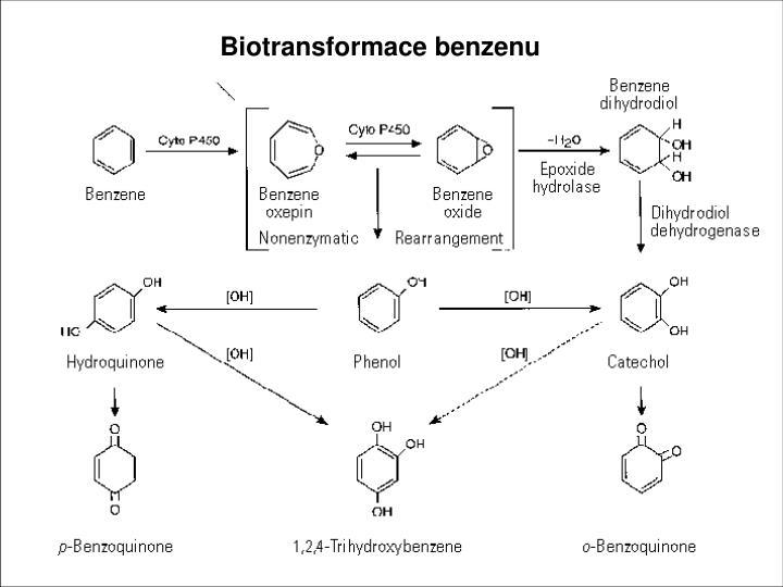 Reaktivní metabolity benzenu atakující biomolekuly