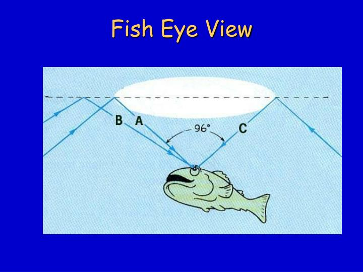 Fish Eye View