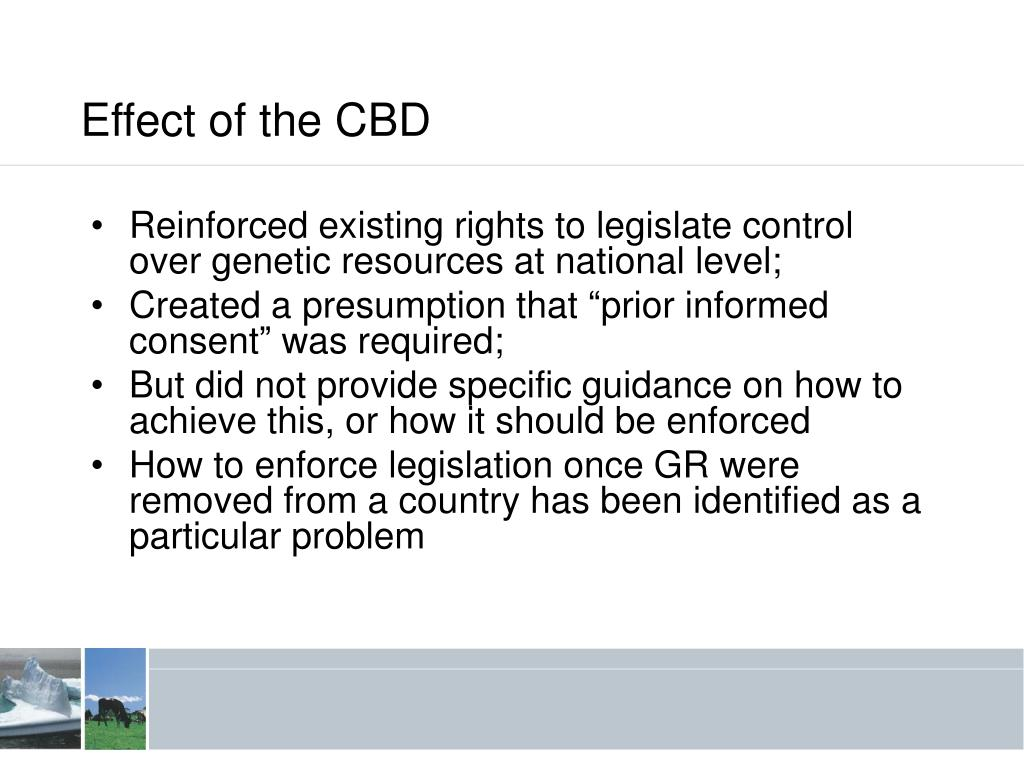Effect of the CBD