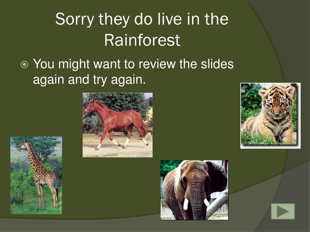 Sorry they do live in the Rainforest