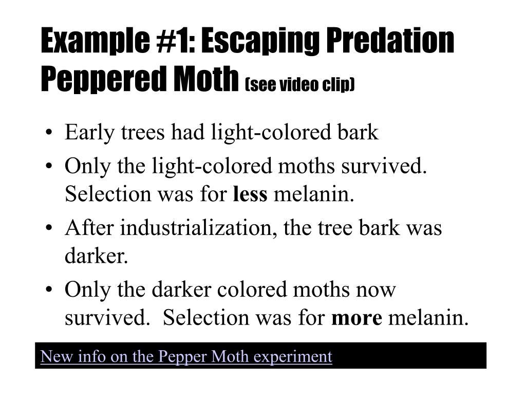 Example #1: Escaping Predation