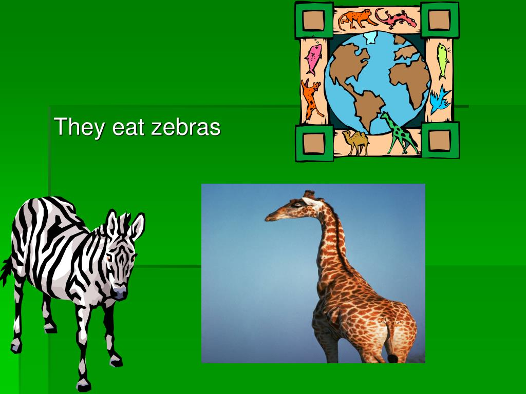 They eat zebras