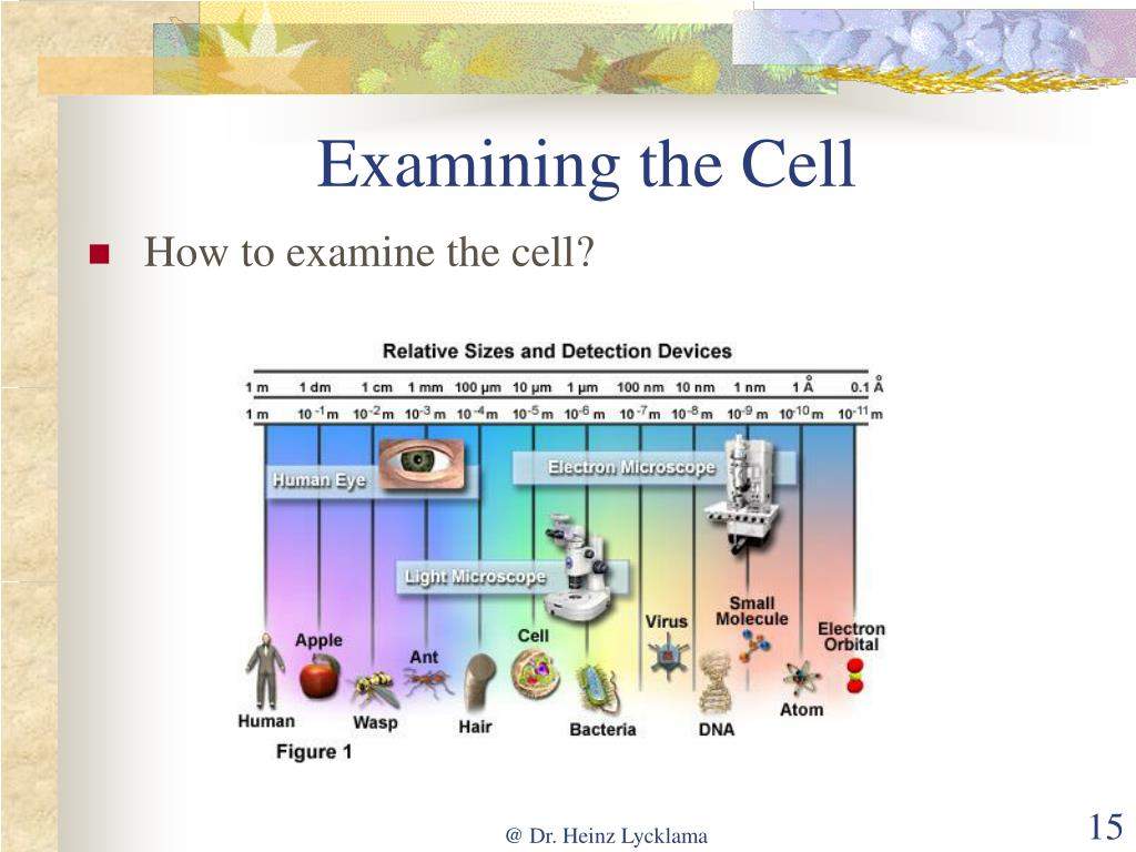 Examining the Cell