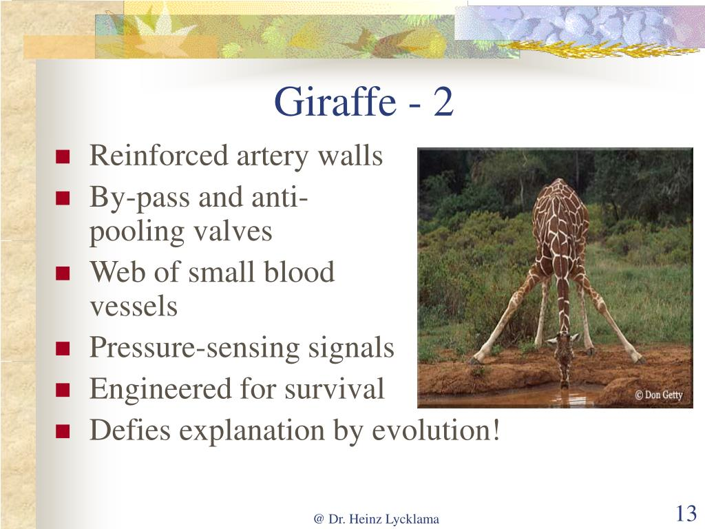 Giraffe - 2